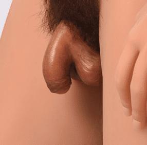 Penis – Atrophic